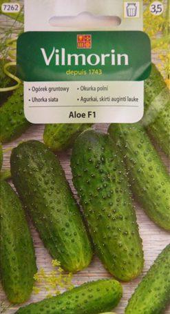 Uhorka Aloe F1