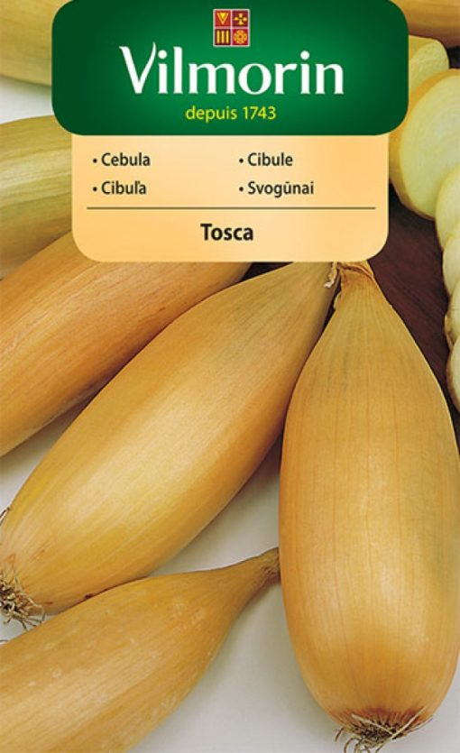 Cibuľa Tosca