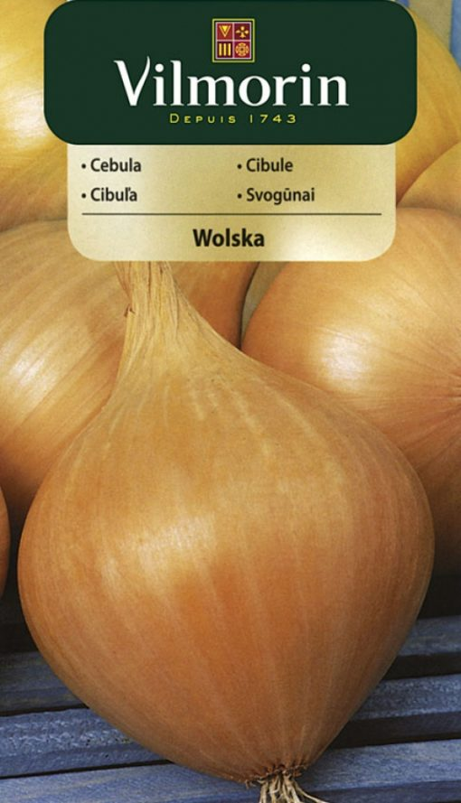 Cibuľa Wolska