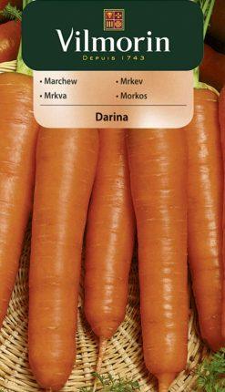 Mrkva Darina