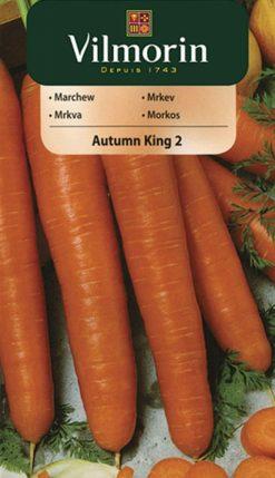 Mrkva Autumn King 2