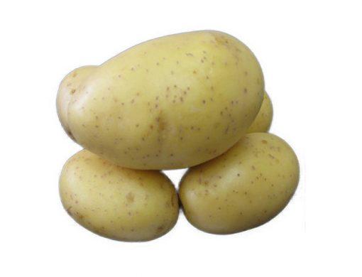 Sadbové zemiaky Princess