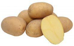 Sadbové zemiaky Vogue