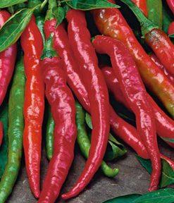 Chilli paprika